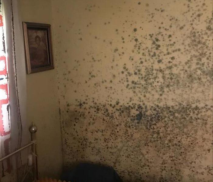 mold residue after water damage has taken place